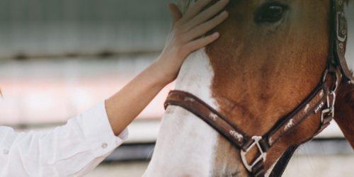 bandeau-cheval