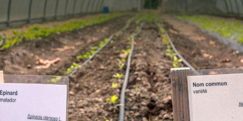 bandeau-horticulture